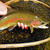 Bucking Rainbow Outfitters | Steamboat Springs, CO | fishing photos